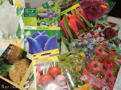 ベルギー・オランダの旅7~冬の花市場_e0326953_2272279.jpg