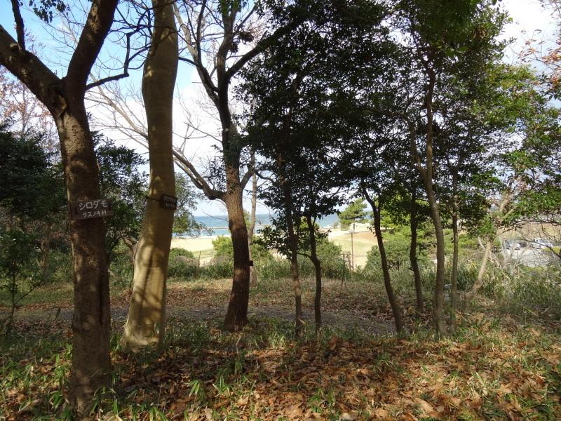 うみべの森で薪作り(一人作業)_c0108460_16460790.jpg