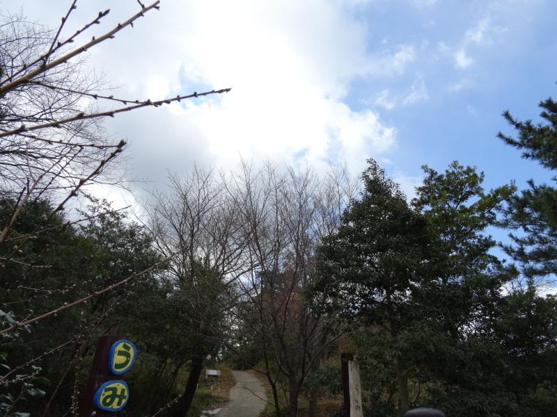 うみべの森で薪作り(一人作業)_c0108460_16461586.jpg
