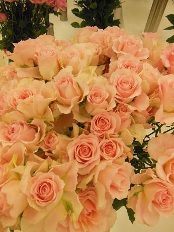 花の展覧会♪_d0135762_2154327.jpg