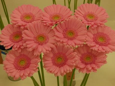 花の展覧会♪_d0135762_21544569.jpg