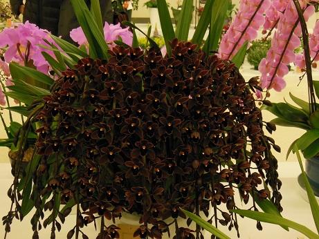 花の展覧会♪_d0135762_21551446.jpg