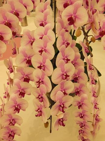 花の展覧会♪_d0135762_21552511.jpg