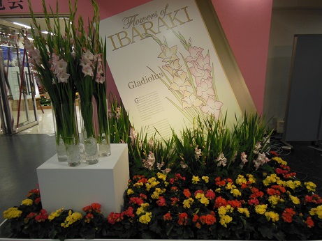 花の展覧会♪_d0135762_21563065.jpg