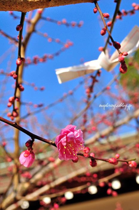 大分市/護国神社/春の訪れ_f0234062_2355740.jpg