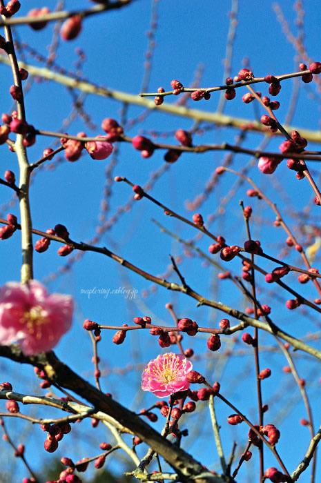 大分市/護国神社/春の訪れ_f0234062_2372387.jpg