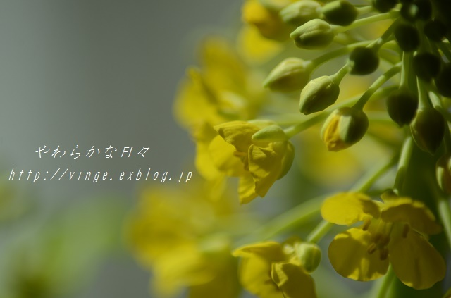 a0158478_16480989.jpg
