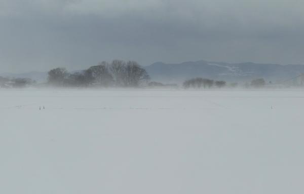 ほわんと雪景色&岩木山&ヒヨドリ♪_a0136293_192670.jpg