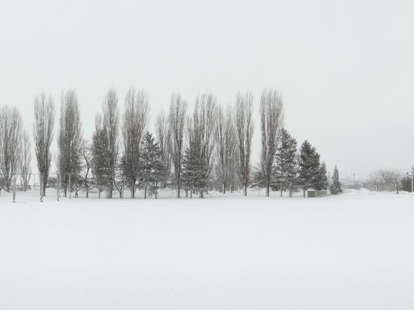 ほわんと雪景色&岩木山&ヒヨドリ♪_a0136293_193586.jpg