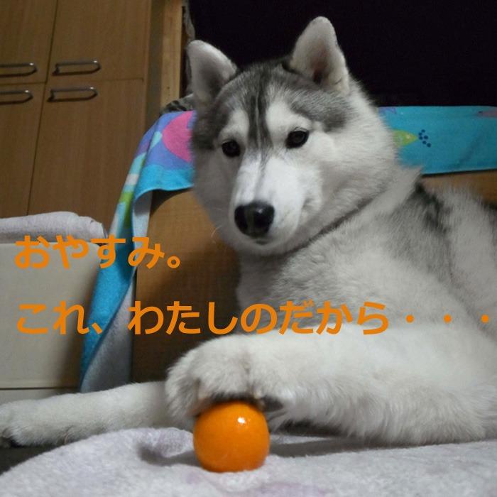 たそがれ、はなちゃん (*^_^*)_c0049299_21591084.jpg