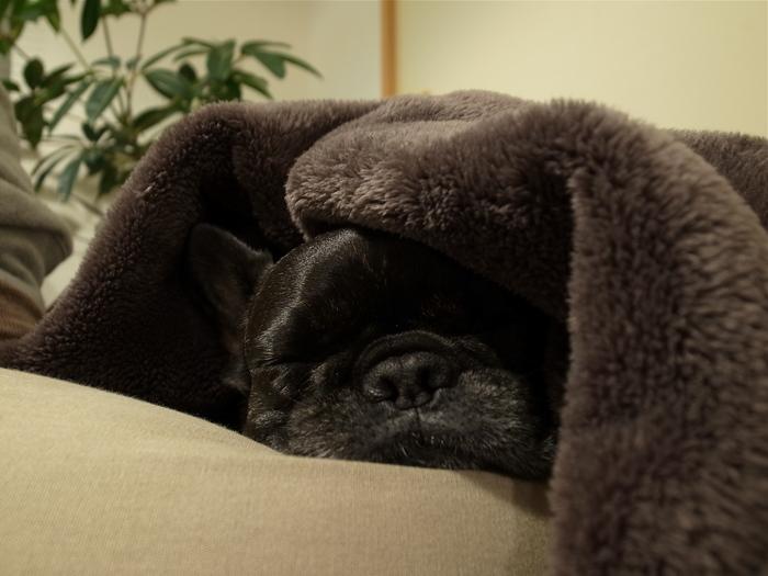 寝息がにんにく臭い子_b0143214_2233437.jpg