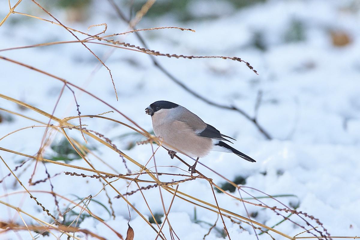 雪の後_d0125872_051322.jpg