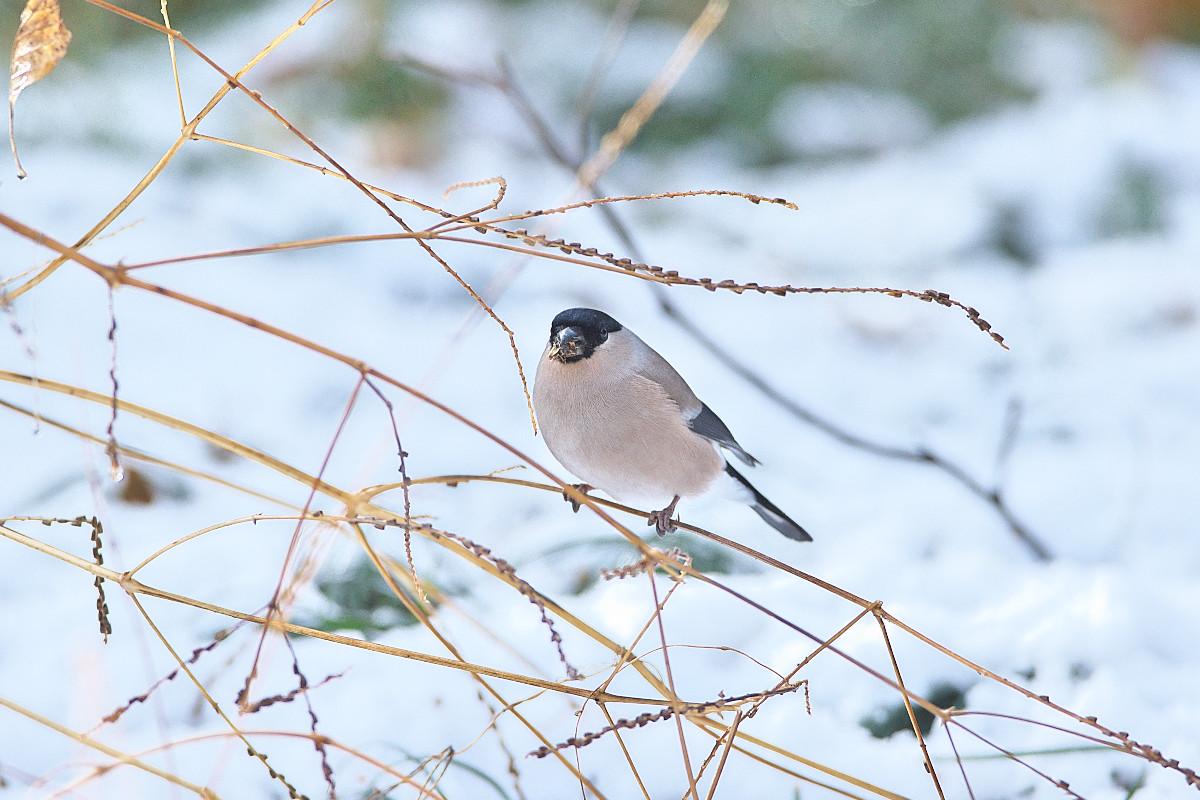 雪の後_d0125872_053795.jpg