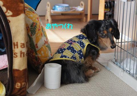 おやつ犬_f0195891_16203924.jpg