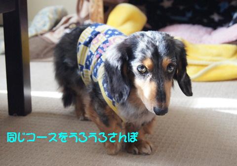 おやつ犬_f0195891_16205794.jpg
