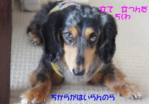 おやつ犬_f0195891_16211666.jpg