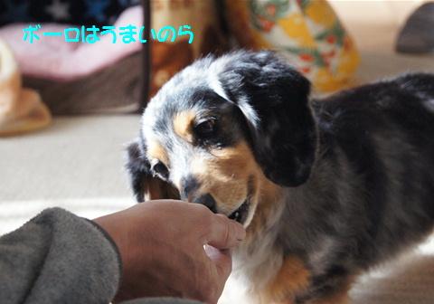 おやつ犬_f0195891_16214158.jpg
