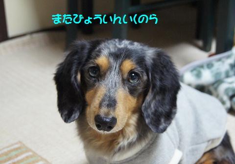 おやつ犬_f0195891_16442311.jpg