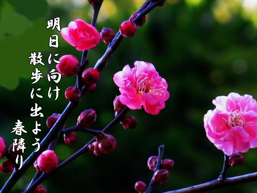 f0137096_2042660.jpg