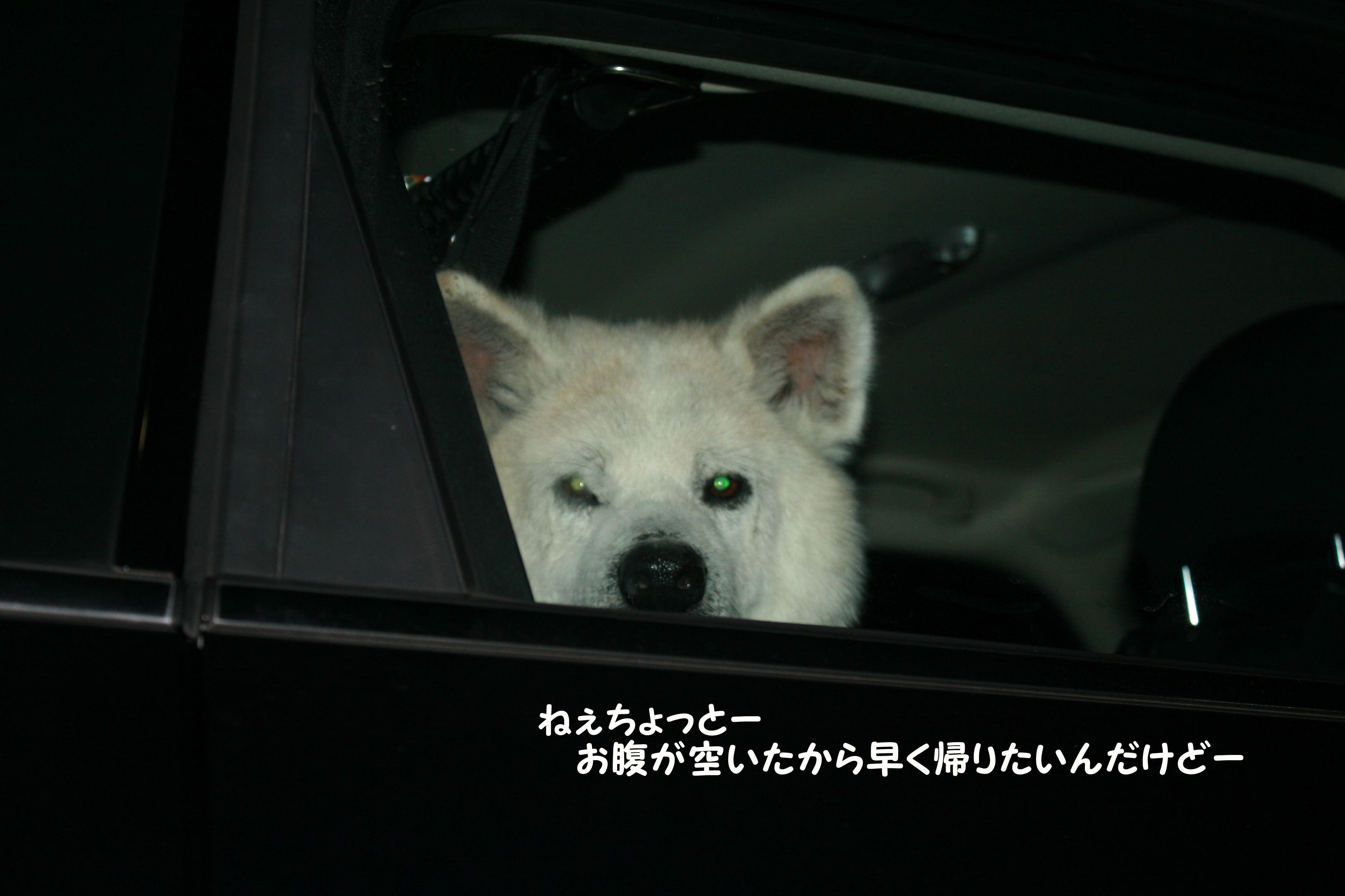 車好き!(あおば)_f0242002_1362612.jpg