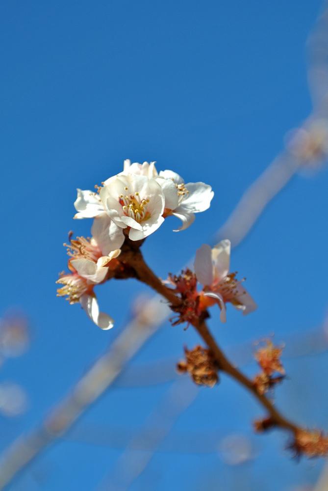 十月桜、などなど_e0089232_15511381.jpg