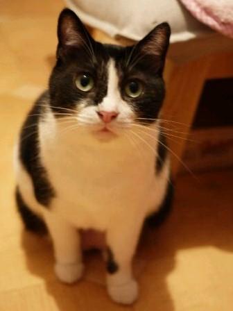 第16回ゆきねこ教室 いろいろ猫家族vol.5開催のお知らせ 熊本市中央区手取本町。_a0143140_19551675.jpg