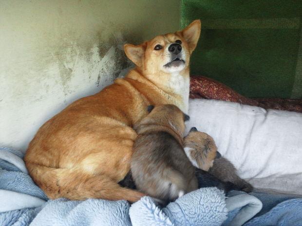 子犬と柴犬_f0242002_0314380.jpg