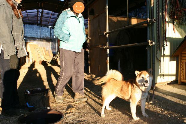 子犬と柴犬_f0242002_0394344.jpg