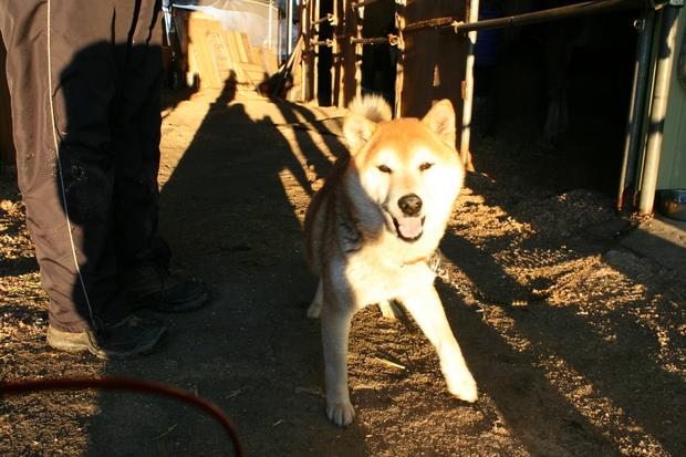 子犬と柴犬_f0242002_040135.jpg