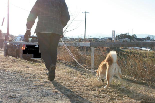 子犬と柴犬_f0242002_0521759.jpg