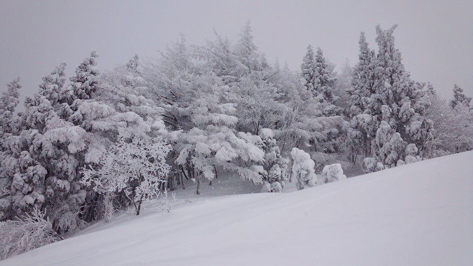 樹氷 極上powder_e0115904_15124212.jpg