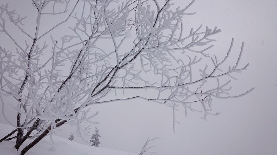 樹氷 極上powder_e0115904_15192323.jpg
