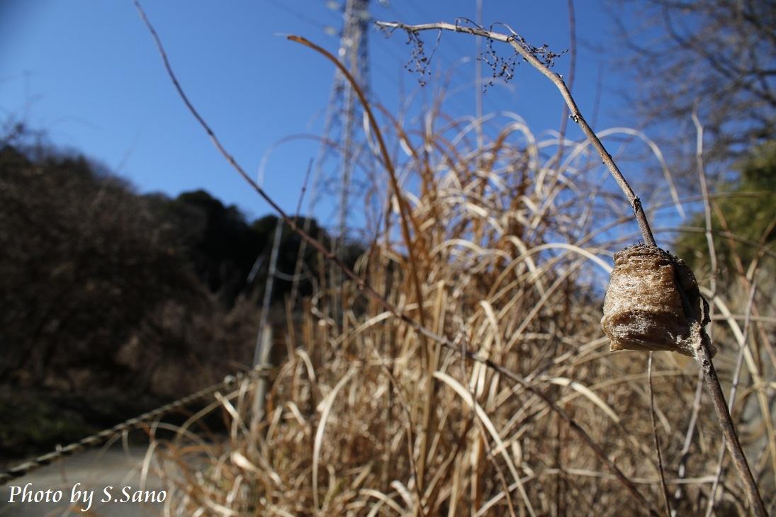 冬と春のあいだ_b0348205_00374584.jpg