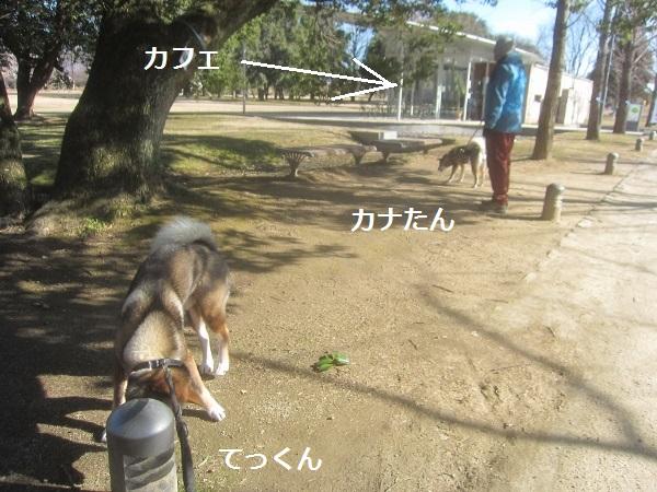 f0143123_20104295.jpg