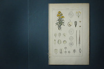 植物画_f0247848_1823460.jpg