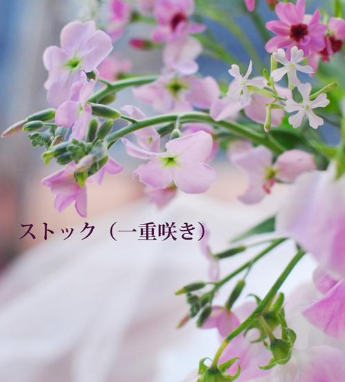 2月になりました 早春ピンクのアレンジメント 東京目黒不動前フローラフローラ花の教室1月のレッスンから_a0115684_03190592.jpg