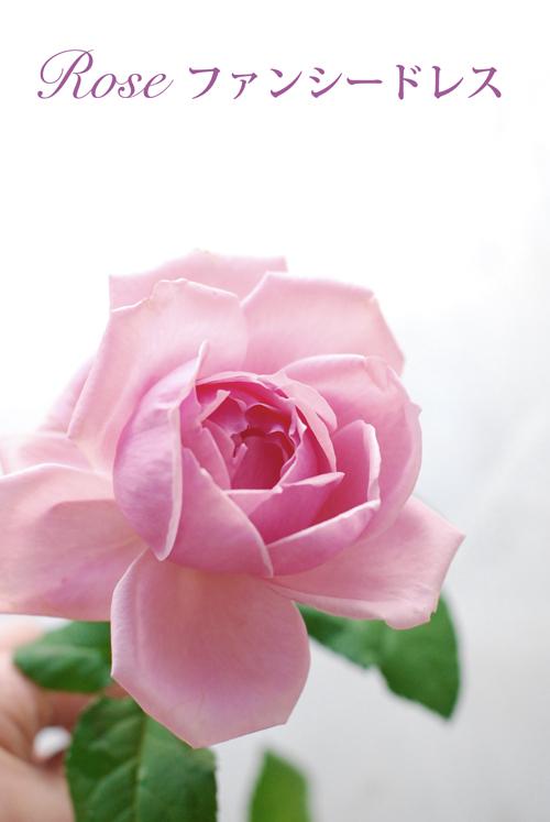 2月になりました 早春ピンクのアレンジメント 東京目黒不動前フローラフローラ花の教室1月のレッスンから_a0115684_03195189.jpg