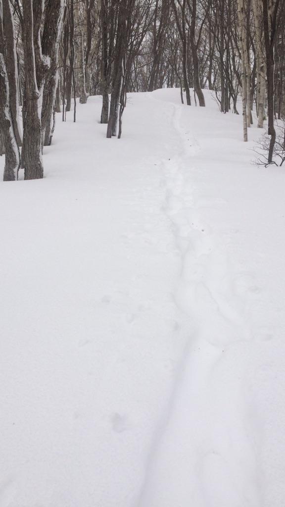 暴風雪の中でのスノートレイルin藻岩山_d0198793_14341889.jpg