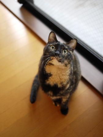 猫のお留守番 ワサビちゃん天ちゃんう京くん編。_a0143140_22142523.jpg
