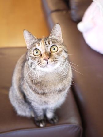 猫のお留守番 ワサビちゃん天ちゃんう京くん編。_a0143140_22144888.jpg