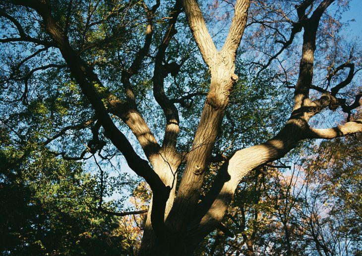 in the woods_b0170947_1593448.jpg