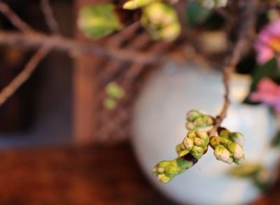 花だより 立春、桜がほころびました_a0279848_14564233.jpg