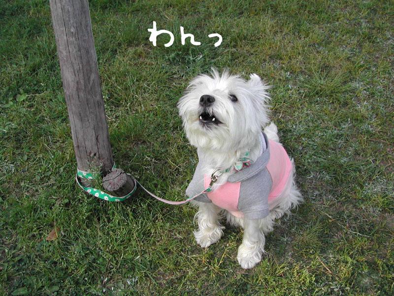2才の頃のアミ。琵琶湖にて。_b0107163_03040480.jpg