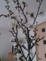 春がきた!_d0272805_15345310.jpg