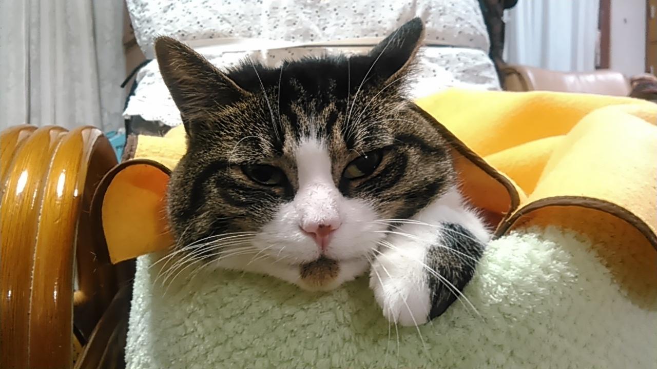 【猫】おねむ_f0141609_22204011.jpg