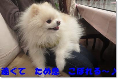 b0167519_1614753.jpg
