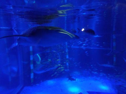 能登島水族館_f0170422_2139946.jpg