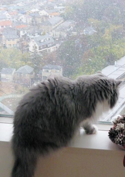 雪の日_e0237625_1642558.jpg