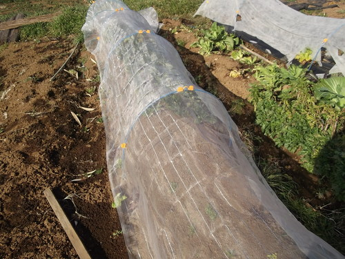 春を待つ野菜..._b0137932_15503252.jpg