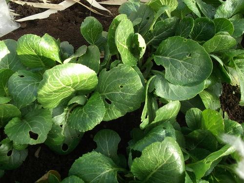 春を待つ野菜..._b0137932_15512357.jpg